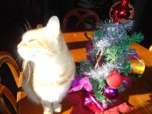 La gattina Mirka