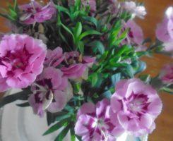Auguri di Buona Pasqua - Redazione Comunicazione e Forme