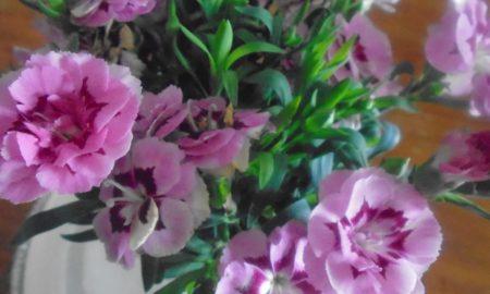 Auguri di Buona Pasqua – Redazione Comunicazione e Forme