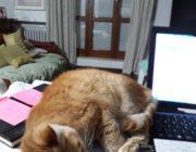 L'amore per gli animali – La gattina Mirka