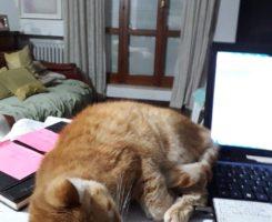 L'amore per gli animali - La gattina Mirka