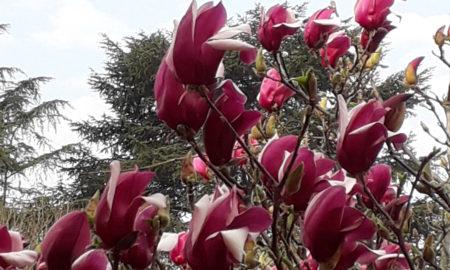 Vivendo tra i fiori