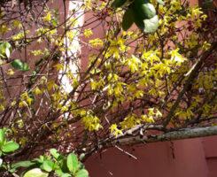 Fiori di Primavera - Per la festa delle donne